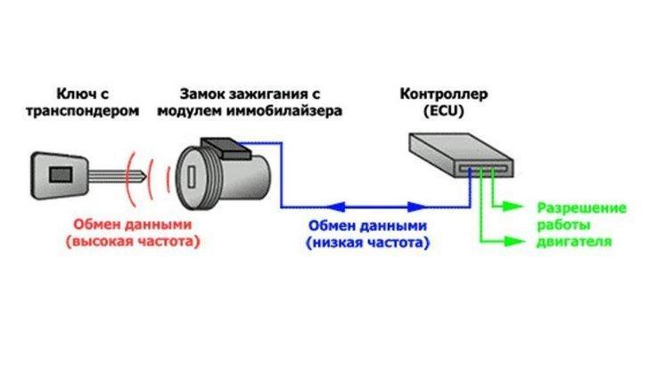 Схематическое устройство иммо